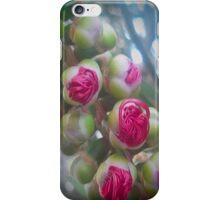 Pohutukawa Tree Flowers iPhone Case/Skin