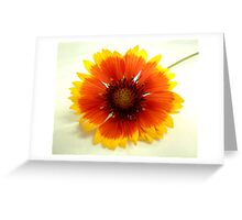 """""""Flower 6 by Chip Fatula Greeting Card"""