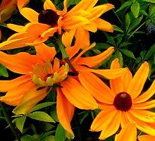 """""""Flowers 5""""  by njchip123"""