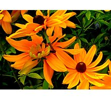 """Flowers 5"" by Chip Fatula Photographic Print"