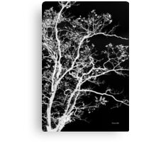 Black and White Tree I Canvas Print
