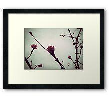 Winter Blossom I Framed Print