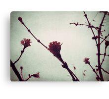 Winter Blossom I Canvas Print