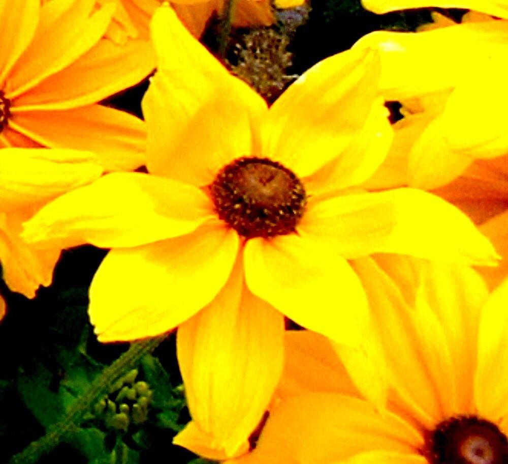 """Yellow Flower""  by njchip123"