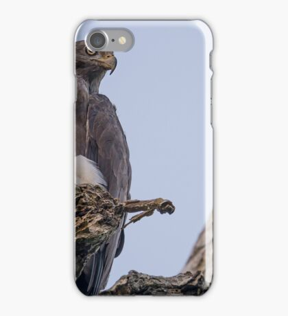 Grey Headed Fish Eagle iPhone Case/Skin