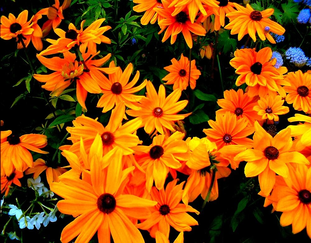 """""""Cluster of yellow & orange Flowers"""" by njchip123"""
