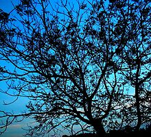 """""""Trees with Blue Sky"""" by Chip Fatula by njchip123"""