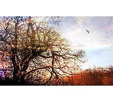 Winter Sun Glow Photographic Print