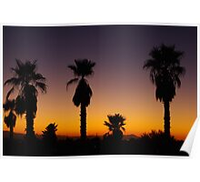 Arizona sunset with palms Poster
