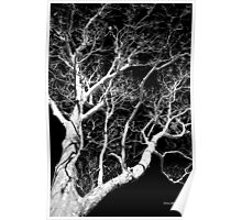 Black and White Tree III Poster