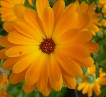 Vivid Orage Flower by Drewlar