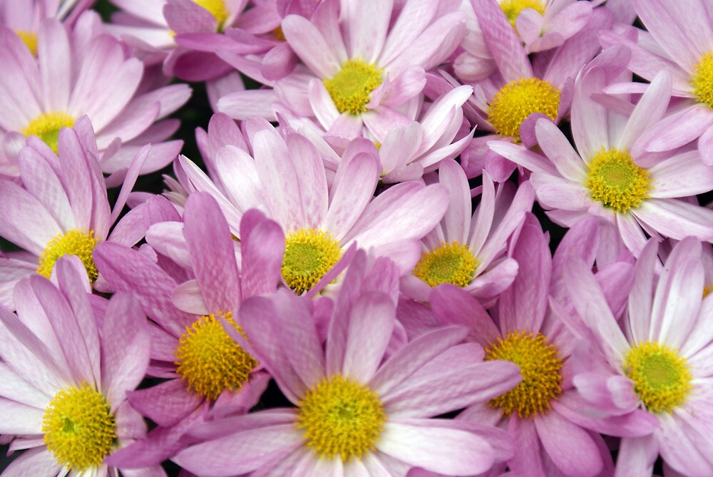 Pink White and Yellow Flowers by Drewlar