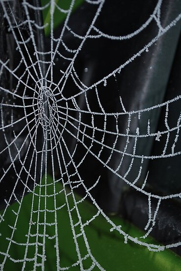 Bejeweled Web by Geraldine Miller