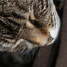 Sleepy Cat by Drewlar