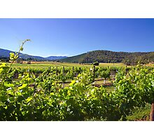 Boyntons Winery Photographic Print