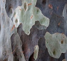 Spotted Gum Detail, Adelaide Hills SA by Michael Firkins