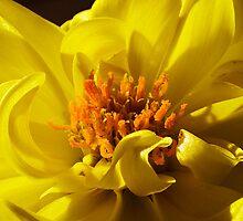 Yellow New by Fabio Catapane