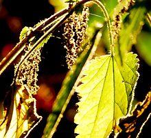 Leaf Spider  by Jason Christopher