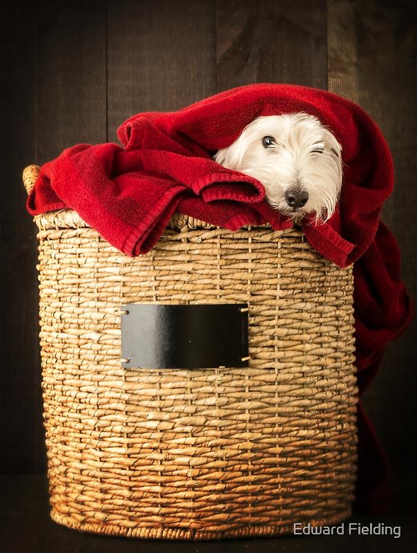 Puppy Laundry Day by Edward Fielding