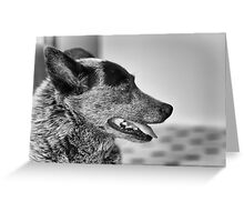 Portrait of an old dog Greeting Card