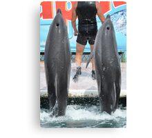 Dolphinarium  Canvas Print