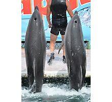 Dolphinarium  Photographic Print