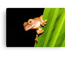 Borneo Tree Frog Canvas Print