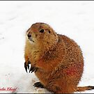 """"""" I hate the snow"""" by mrcoradour"""