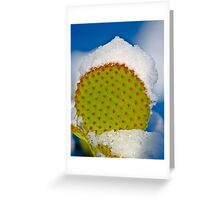 We Don't Get Snow Here!! Greeting Card