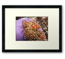 Underwater World - Anemonefish Framed Print