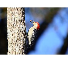 Woodpecker Up Close Photographic Print