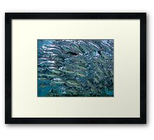 Underwater World - School of Fish Hunting Framed Print