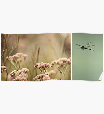 Nature ~ dragonfly Poster