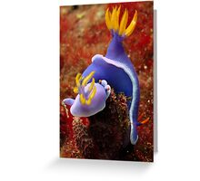 Underwater World - Nudibranch Greeting Card