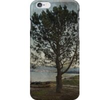 Pine and boats iPhone Case/Skin
