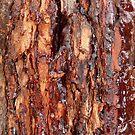 Ambertaffee Deliciosa: Pinjarra, Western Australia by linfranca