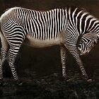 zebra by lucyliu