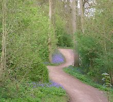 Bluebell Wood by Lucy Wilson