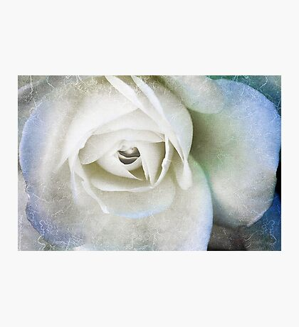 The White Rose Photographic Print