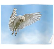 Barn Owl Hunting Hover Poster