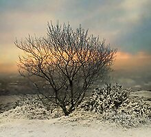 Frosty Shropshire Morning by Simon Harris