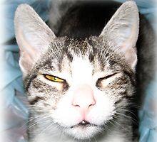 Cat by rubalo