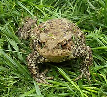 People think I'm a toad but i'm really a Prince by Sandra Caven