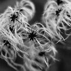 Winterish by SergiWave