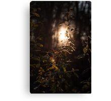 Weak forest dusk Canvas Print