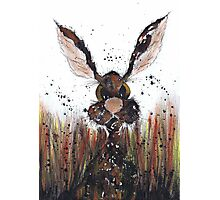 HARE IN GRASS Photographic Print
