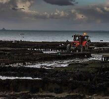 Bleak oyster park by SergiWave