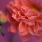 Pink Flowers by Tamarra