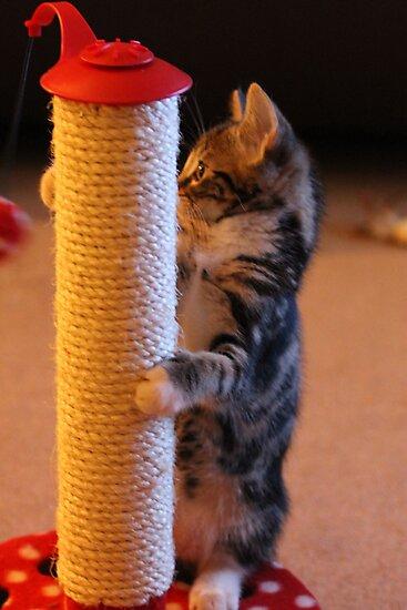 Pole Cat by Ladymoose