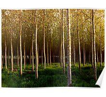 Autumn Sunset at Duskie Wood Poster